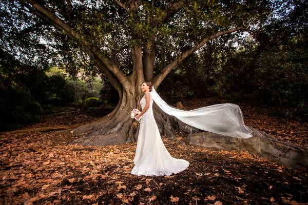 mounts bay trees wedding photographer