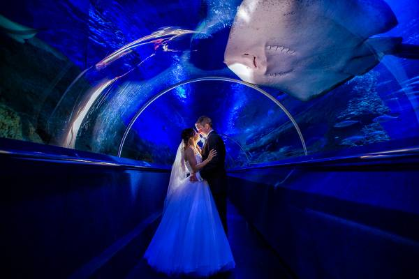 AQWA aquarium wedding photos