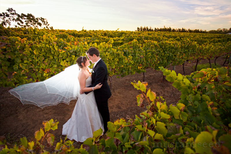 sittella winery wedding