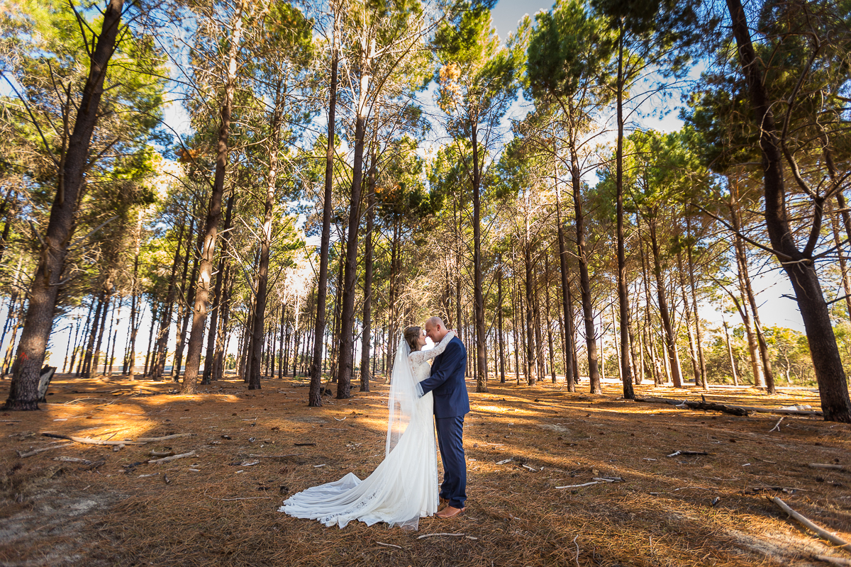 wanneroo pine forest old fig tree caversham the vines wedding photographer