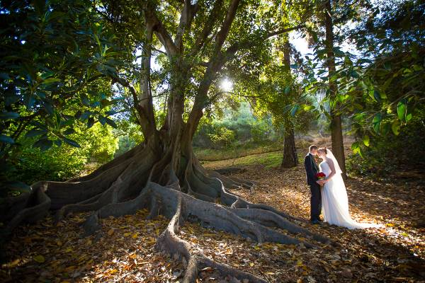 mounts bay road wedding