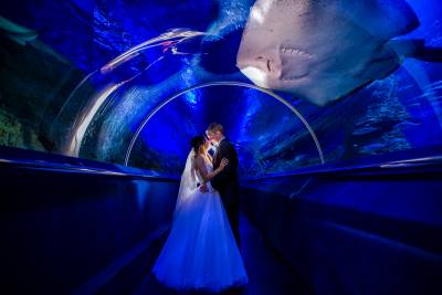 AQWA aquarium wedding photos